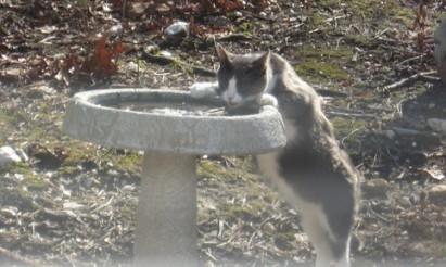 birdbath-cat2.jpg